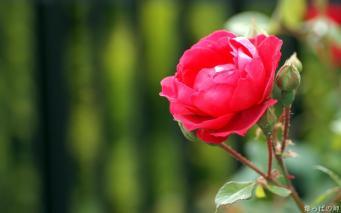 flowerff